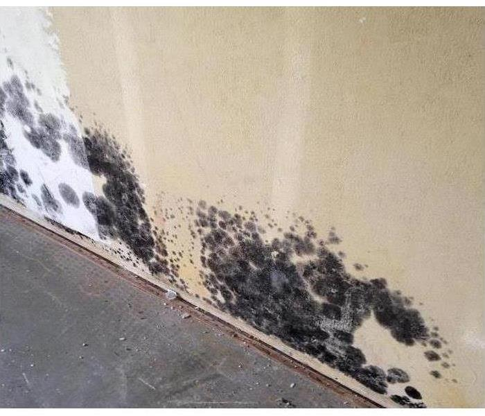 Wall with spots of black mold