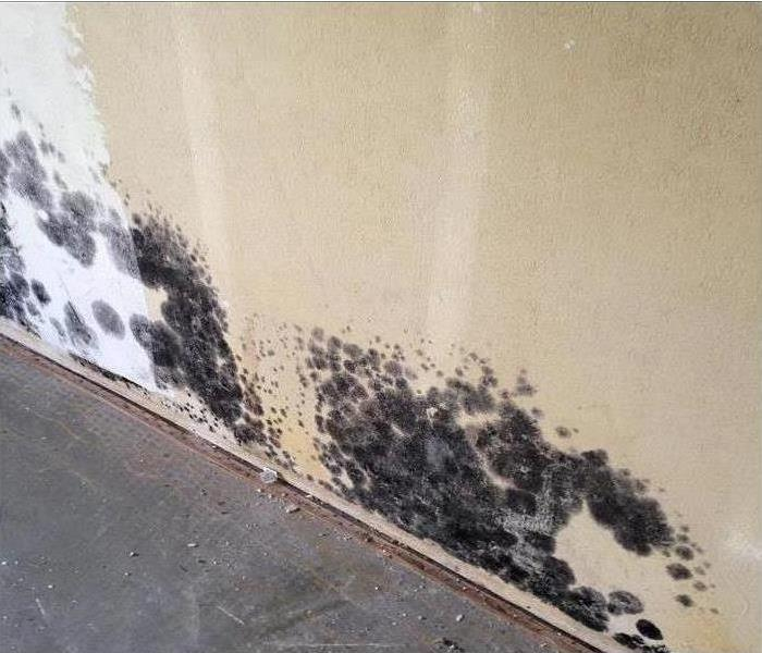 Patches of black mold growing in wall.