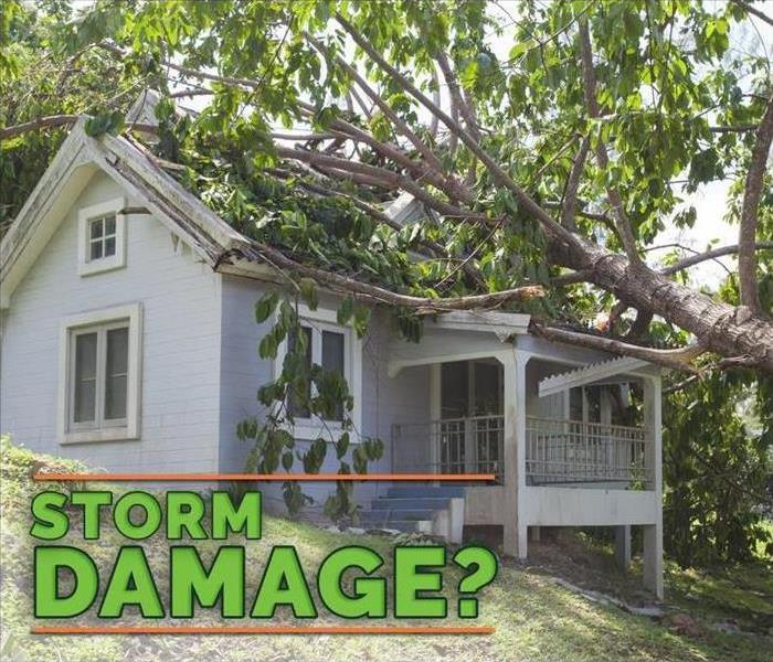 "Image of tree on top of roof of a home, with green letters asking ""Storm damage?"""